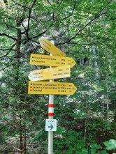 Schilderwald hinter dem Lautersee.