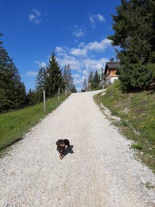 Servus, Gufferthütte!
