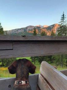 Das Fräulein bestaunt das Alpengrlühen.
